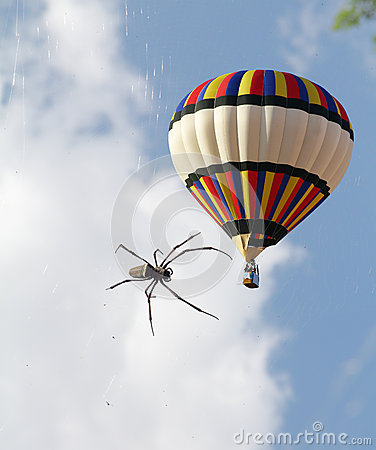 The air balloon and a big tropical spider