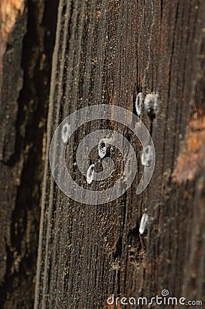 Free Air Gun Pellets Stock Image - 39368501