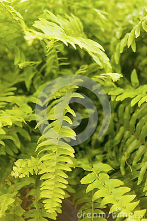 Free Air Purifying Plant Royalty Free Stock Photo - 25183115