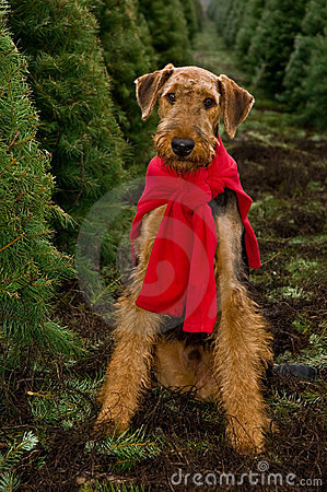 Airedale dog Christmas trees