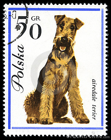 Airedale Terier in a vintage, canceled post stamp