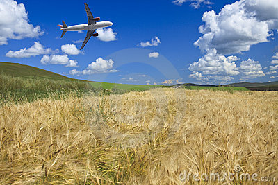Airplane and wheat field
