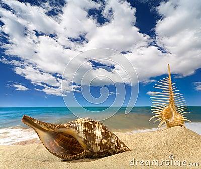 Paisaje con la concha marina en el cielo