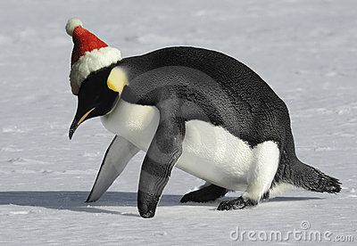 Ajuste para o Natal