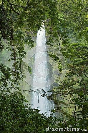 Free Akaka Falls Stock Photography - 1165502