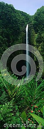 Akaka Falls State Park, Big Island of HI