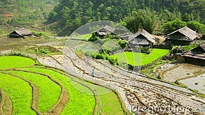 Akha-Dörfer in Sapa, Vietnam, ausgezeichnete Reis-Terrasse stock video footage