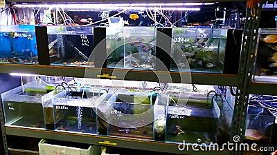 Akwarium sklep w Hong Kong zdjęcie wideo