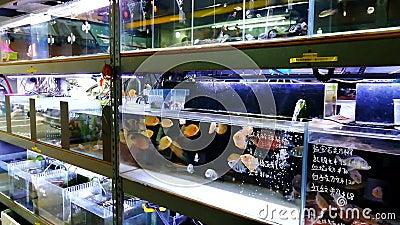 Akwarium sklep w Hong Kong zbiory wideo