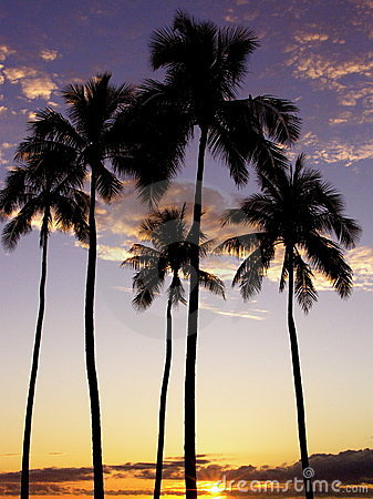 Ala Moana Palm Trees Sunset