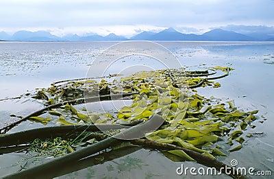 Alaska Beach B1