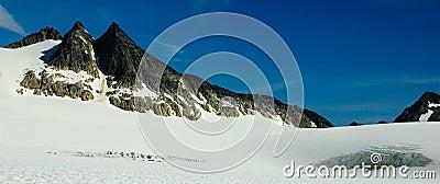 Alaska glacier sled dog camp