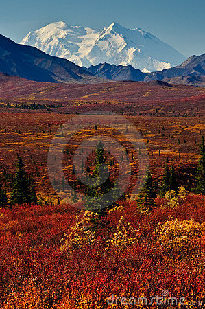 Free Alaska Mt McKinley With Red Autumn Tundra Royalty Free Stock Photography - 10991607
