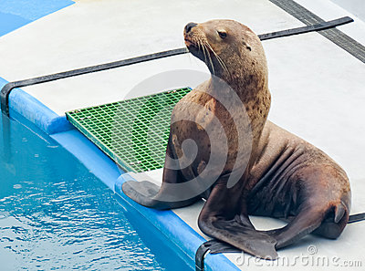 Alaska - Sea Life Center Sea Lion