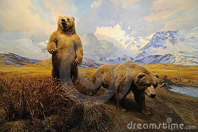 Alaskan Bears Editorial Stock Image