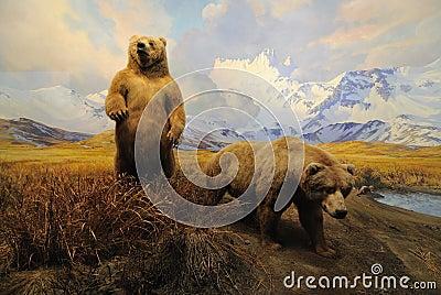 Alaskan Bears Editorial Stock Image