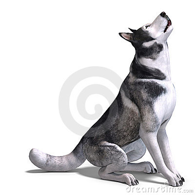 Alaskan Malamute Dog. 3D rendering with clipping