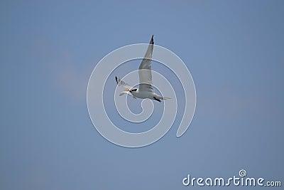 Albatros birds fauna tropical yucatan exotic Mexic