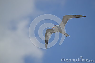 Albatros birds fauna tropical yucatan exotic Mexic