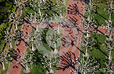 Visualizzazione ad albero B1a di Berkeley