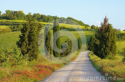 Alberi di cipresso della Toscana con la pista
