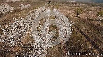 Alberi di fioritura da un'altezza video d archivio