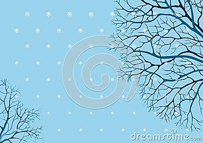 Alberi di inverno