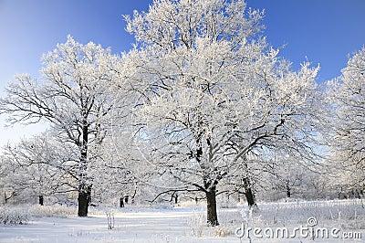 Alberi innevati in inverno fotografia stock immagine - Animali in inverno clipart ...