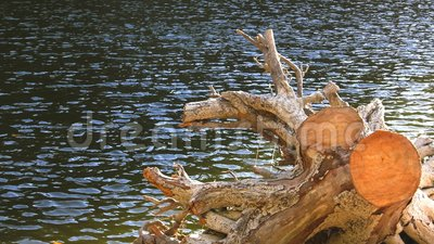 Albero asciutto sul lago archivi video