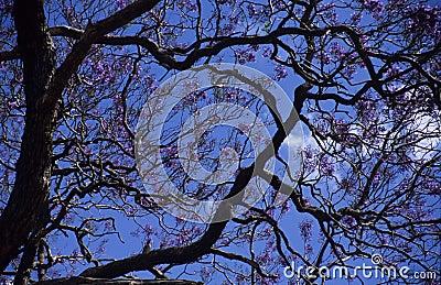 albero con i fiori viola immagini stock libere da diritti
