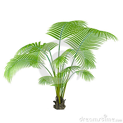 Albero della pianta della palma immagine stock libera da for Pianta palma
