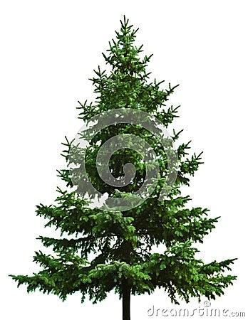 Albero di Natale nudo