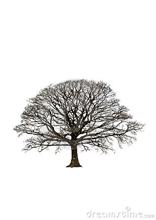 Albero di quercia astratto di inverno