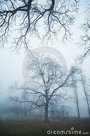 Albero in nebbia