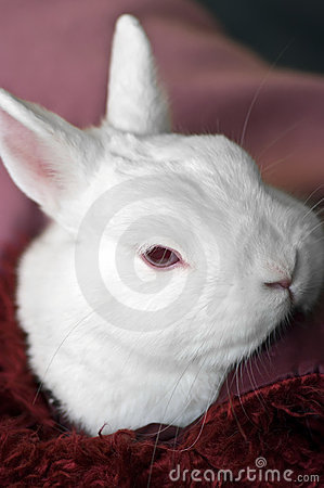 Pet Rabbit Room