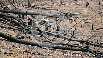 Aldeões Carry Back e passeio de Akha na floresta queimada, Laos video estoque