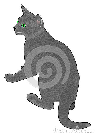 Alert Grey Cat