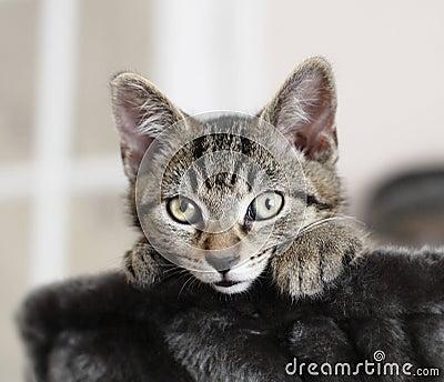 Alert kitten cat