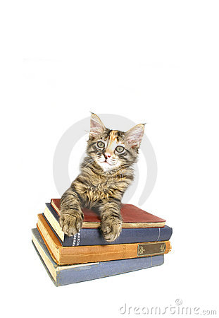 Alert Kitten on Old Books