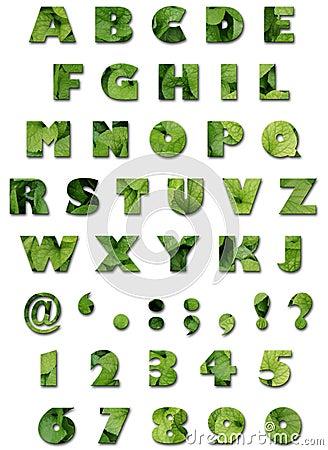 Alfabeto - textura de las hojas - verano verde