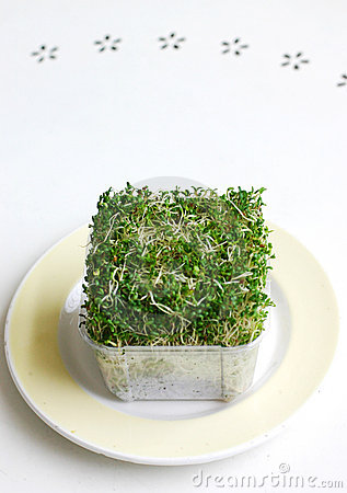 Free Alfalfa & Broccoli Sprouts Royalty Free Stock Image - 4697666