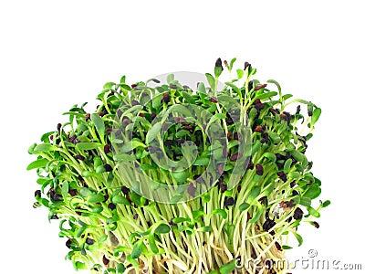 Alfalfa flance