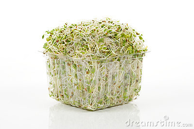 Alfalfa Sprout