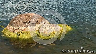 Algae bedekte steen in Gentle Waves Big Bear Lake stock videobeelden