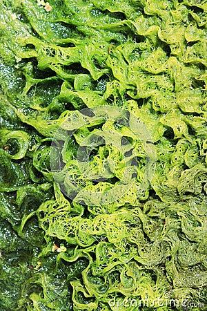 Free Algae On Rocks Stock Image - 25543931