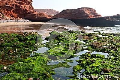 Algae at shore