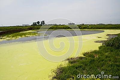 Algal bloom Stock Photo