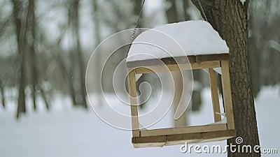 Alimentador do pássaro na floresta do inverno filme