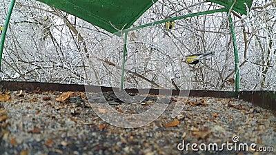 Alimentador dos melharucos do pássaro para dentro vídeos de arquivo