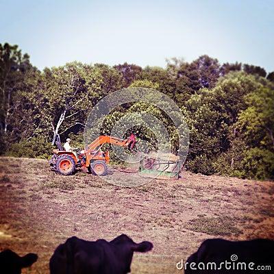 Alimenter les vaches